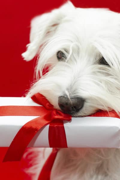 Gifts for Pet Lovers | Tech Girl Help Desk